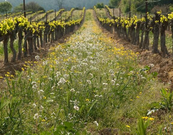 sintra - clasificación de herbicidas