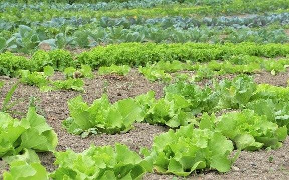 herbicidas precios